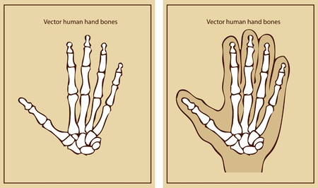 human hand  Stock Vector - 9631819