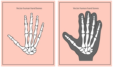 phalanx: mano umana