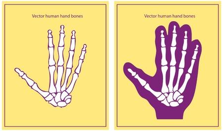 human hand Stock Vector - 9631818