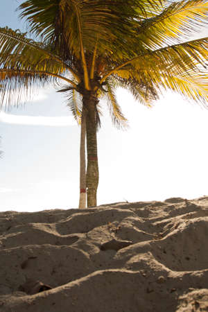 Caribbean landscapes in summer season, gorgeous beaches and wonderful times