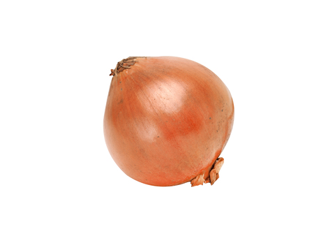 one onion close-up on a white background Standard-Bild