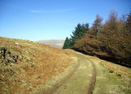 Birker Fell, Lake District, Cumbria Stock Photo - 24053464