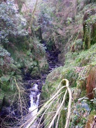 lake district: Stanley Ghyll, Lake District Stock Photo