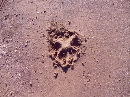 indentation: Paw print from a dog left in the sand on a beach Stock Photo