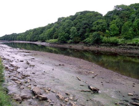 muddy: Driftwood on Muddy Banks of the River Wear Near Sunderland