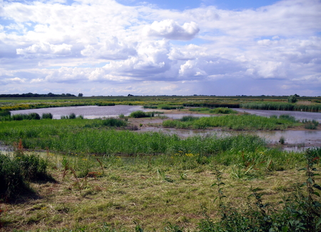 Marsh Landscape at Welney Nature Reserve in Norfolk