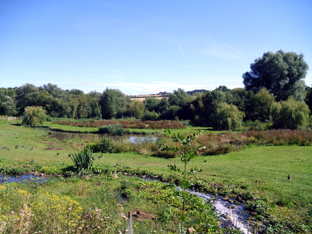 Landscape at Washington Wetlands Nature Reserve near Sunderland