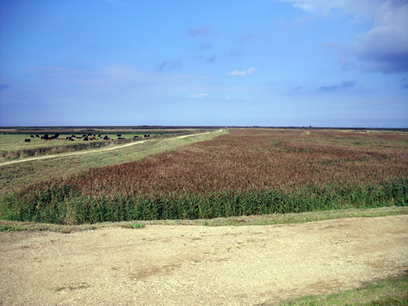 The Landscape at Blakeney in Norfolk in Summer Stock Photo
