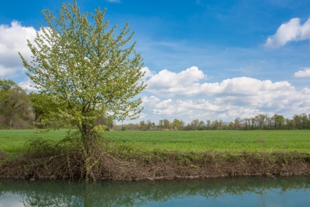 Fields, sky, clouds and a tree in a relaxing country landscape photo