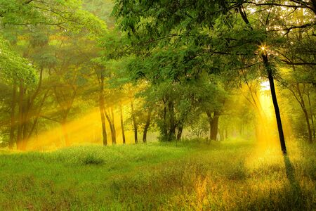 The sun rays light through the tree branch in the spring forest