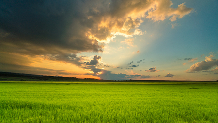 The picturesque sunset above the green wheat field
