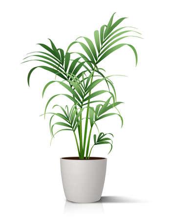 3d realistic vector floor house green plant, palm in white pot. Isolated on white illustration icon. Vektorgrafik