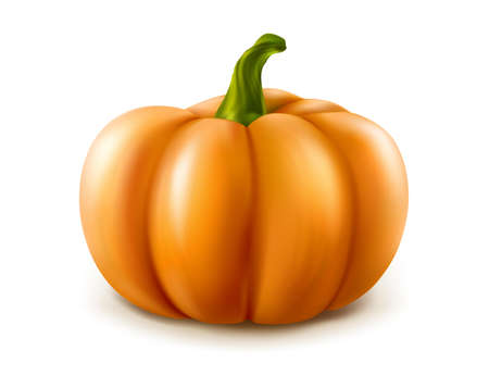 3d realistic vector orange pumpkin isolated on white background.