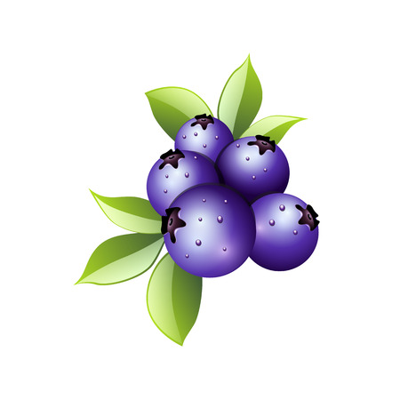 whortleberry: Blueberry branch, leaves and berries isolated on white background. Realistic digital paint. Vector illustration.