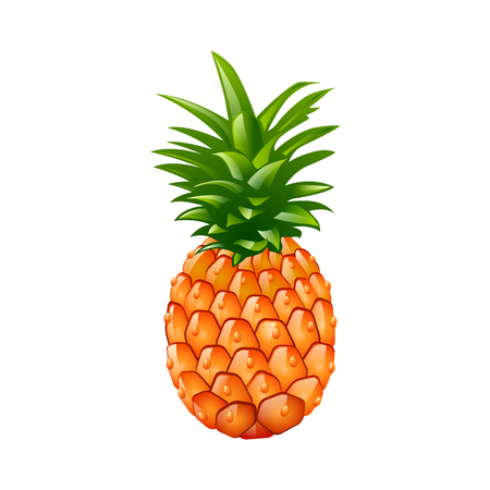 haulm: Pineapple. Vector illustration. isolated on white background