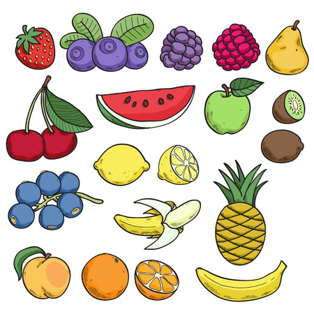 Colorful fruits and berries in hand drawn sketch style. Vector