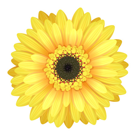 Colorful gerbera flower head - yellow and black colors.