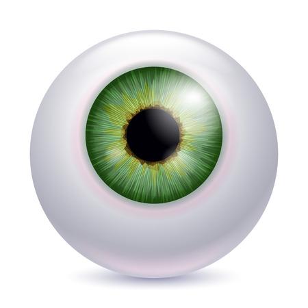 globo ocular: Iris del globo ocular humano alumno aislado en fondo blanco - de color verde.