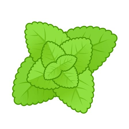 spearmint: Simple style mint leaves illustration. Nature symbol.