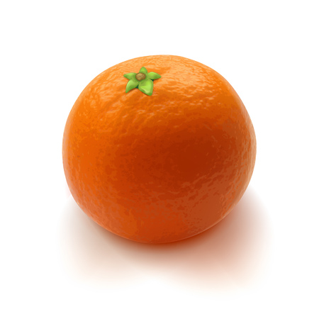 mandarin orange: Sweet realistic orange mandarin tangerine vector illustration. Good for packaging design.