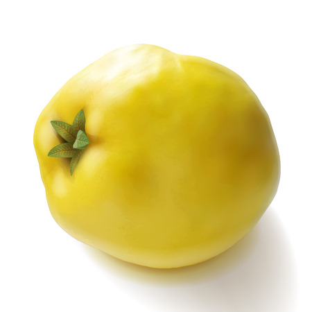 Quince apple yellow fruit realistic vector illustration. Good for packaging design.