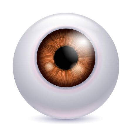 Human eyeball iris pupil isolated on white background - Brown color. Brown eye realistic