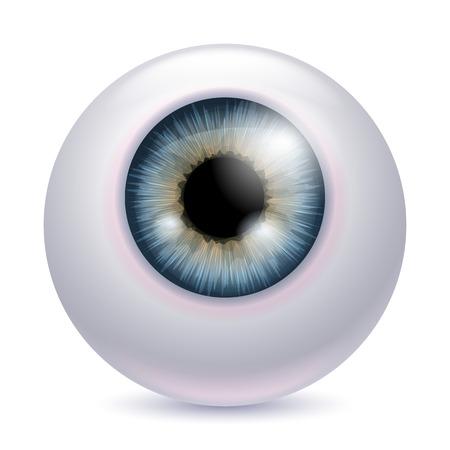 gray: Human eyeball iris pupil isolated on white background - gray color. Gray eye realistic