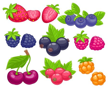 red berries: Assorted berries set vector illustration. Sweet juicy strawberry cherry blueberry raspberry black and red currant bilberry cloudberry isolated on white background. Illustration