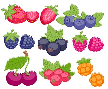 blackberry: Assorted berries set vector illustration. Sweet juicy strawberry cherry blueberry raspberry black and red currant bilberry blackberry cloudberry isolated on white background. Illustration