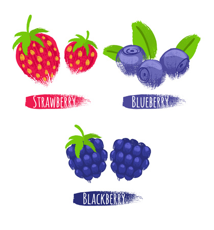 bilberry: Assorted berries set vector illustration. Painted hand drawn sketch texture. Sweet juicy strawberry blueberry bilberry blackberry isolated on white background.