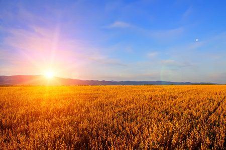 horizonte: Amanecer en el campo