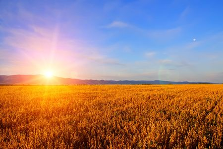 Sunrise im Feld Standard-Bild - 6209660