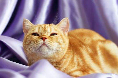 The kitten looks up photo
