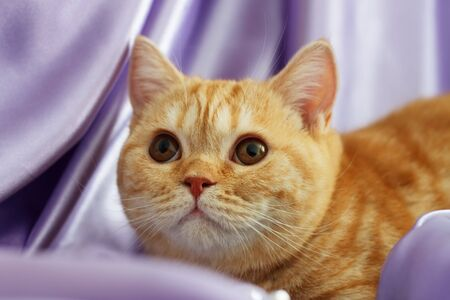 the well groomed: The kitten looks up
