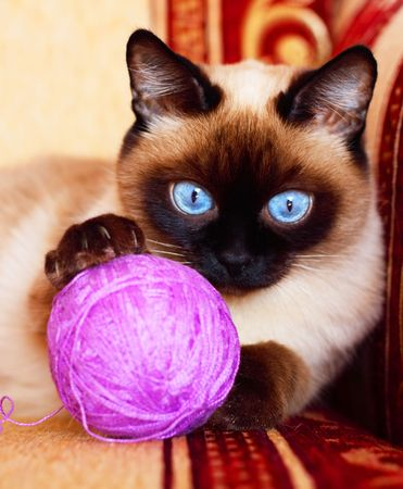 Cat with red ball photo