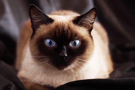 Cat on a dark background photo