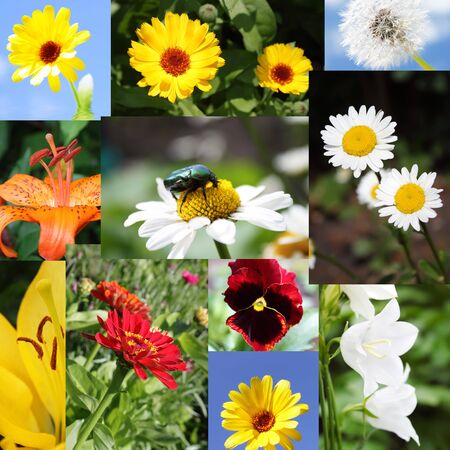 Different flowers photo