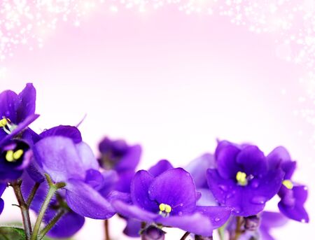 text free space: Pansies on a purple background