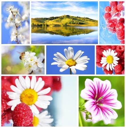 Summer collage. Altai mountains, flowering plum, chamomile, raspberry photo