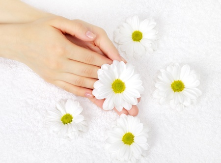 hands with a white chrysanthemum on towel photo