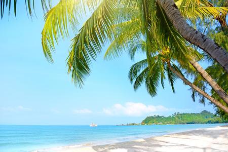 Beach with palm trees. Klong Prao Beach, Koh Chang, Thailand