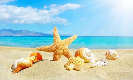 Letnia plaża z rozgwiazdy i muszli. w tle morza Zdjęcie Seryjne