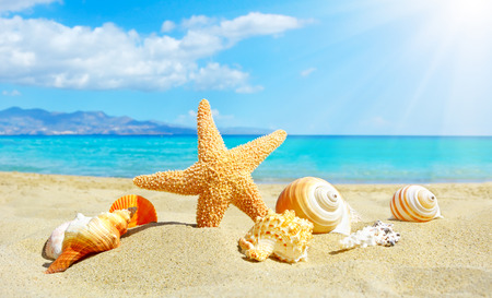 Summer beach with starfish and shells. background sea Stock Photo