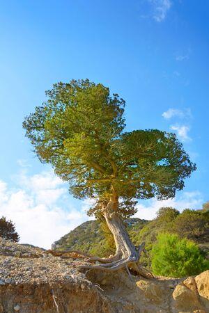 crete: Heart tree. Crete, Europe