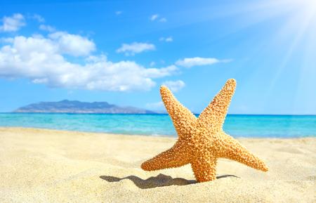 Zeester op het strand. Kreta, Griekenland Stockfoto