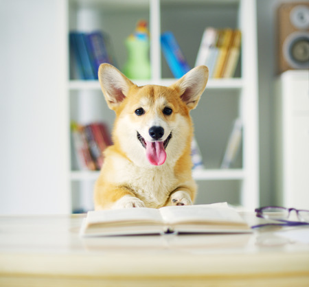 Dog reading book. background Bookshelf 版權商用圖片