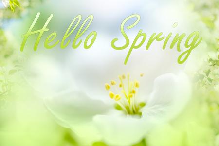 Hello spring text. Flower closeup Stock Photo