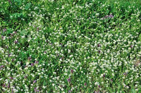 spring meadow sunny background with little flowers Stock Photo - 5767851