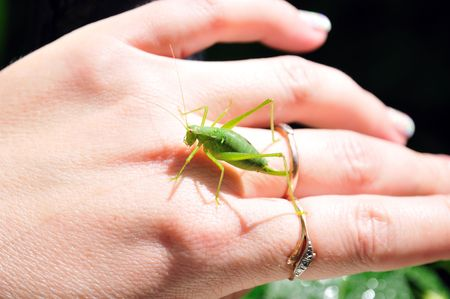 green little grasshopper sitting on the womans hand photo