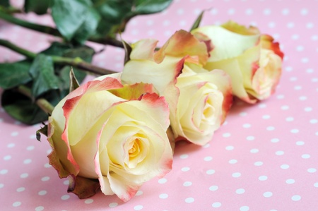 three yellow roses on pink dots background photo